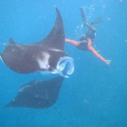 manta nusa penida snorkeling