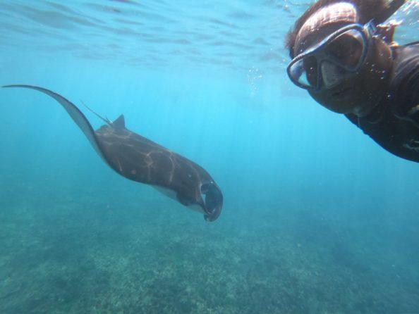 Snorkeling nuasa penida